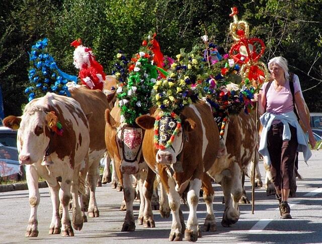В Швейцарии сохранилось немало пастушьих традиций