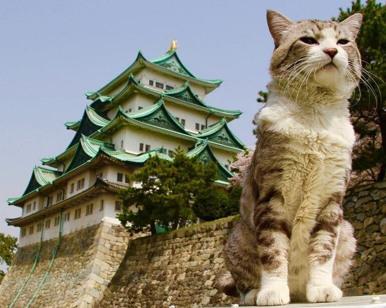 Японцы посвящают День кошек своим любимцам