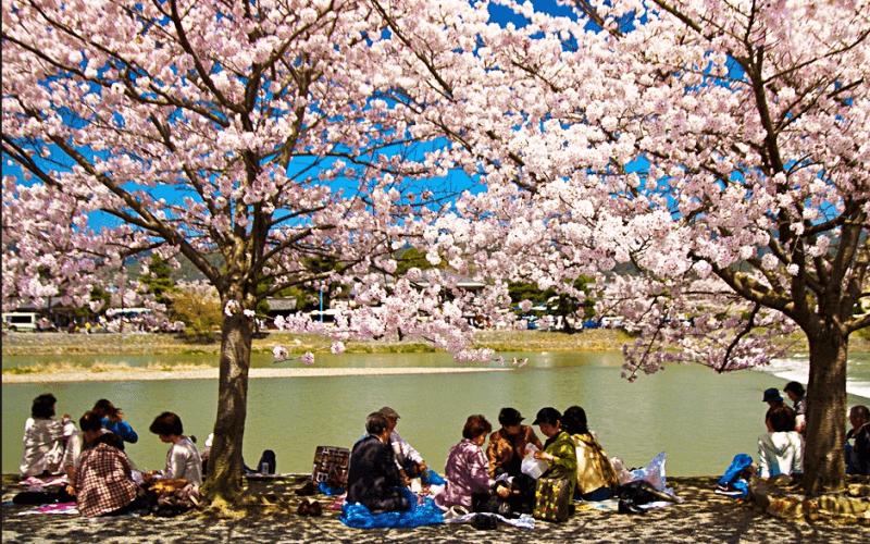 Ханами - один из главных праздников Японии