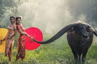 Индонезийцы