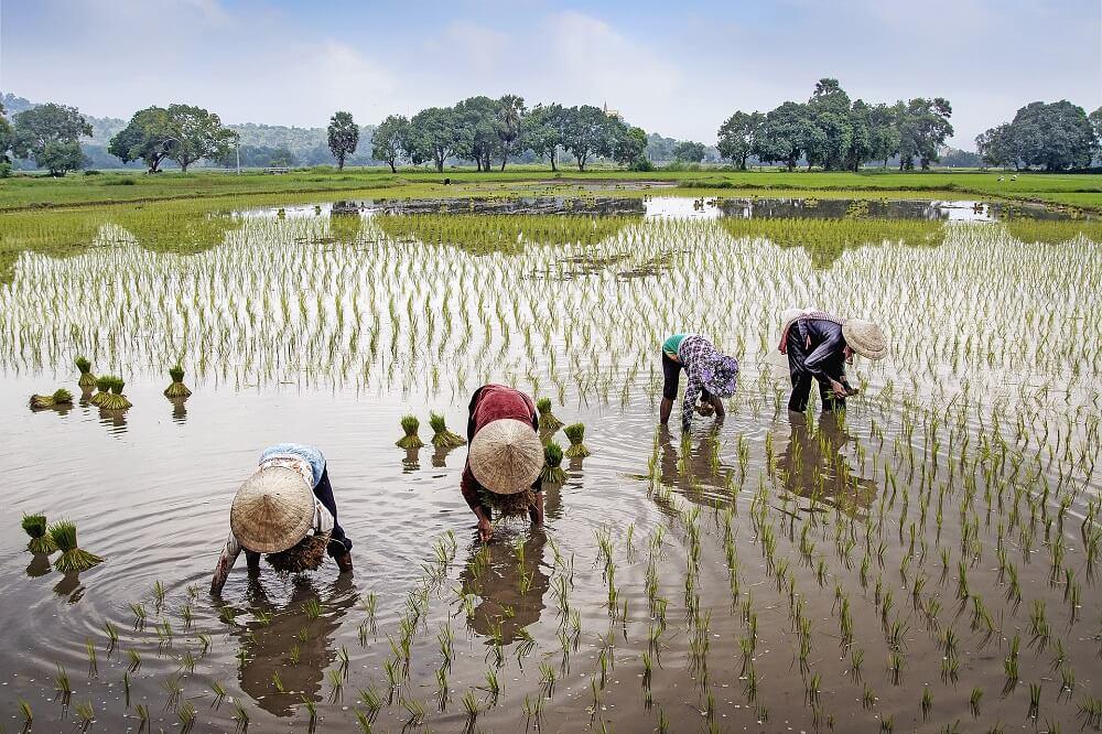 Вьетнамцы очень трудолюбивы Văn Long Bùi с сайта Pixabay (2)