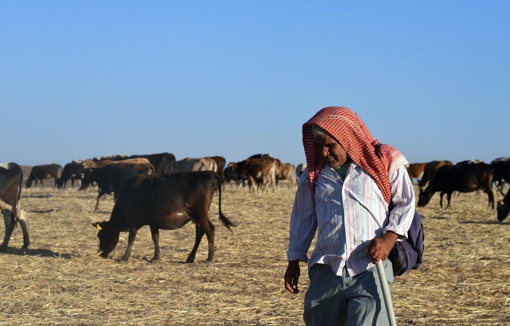 Курдский пастух