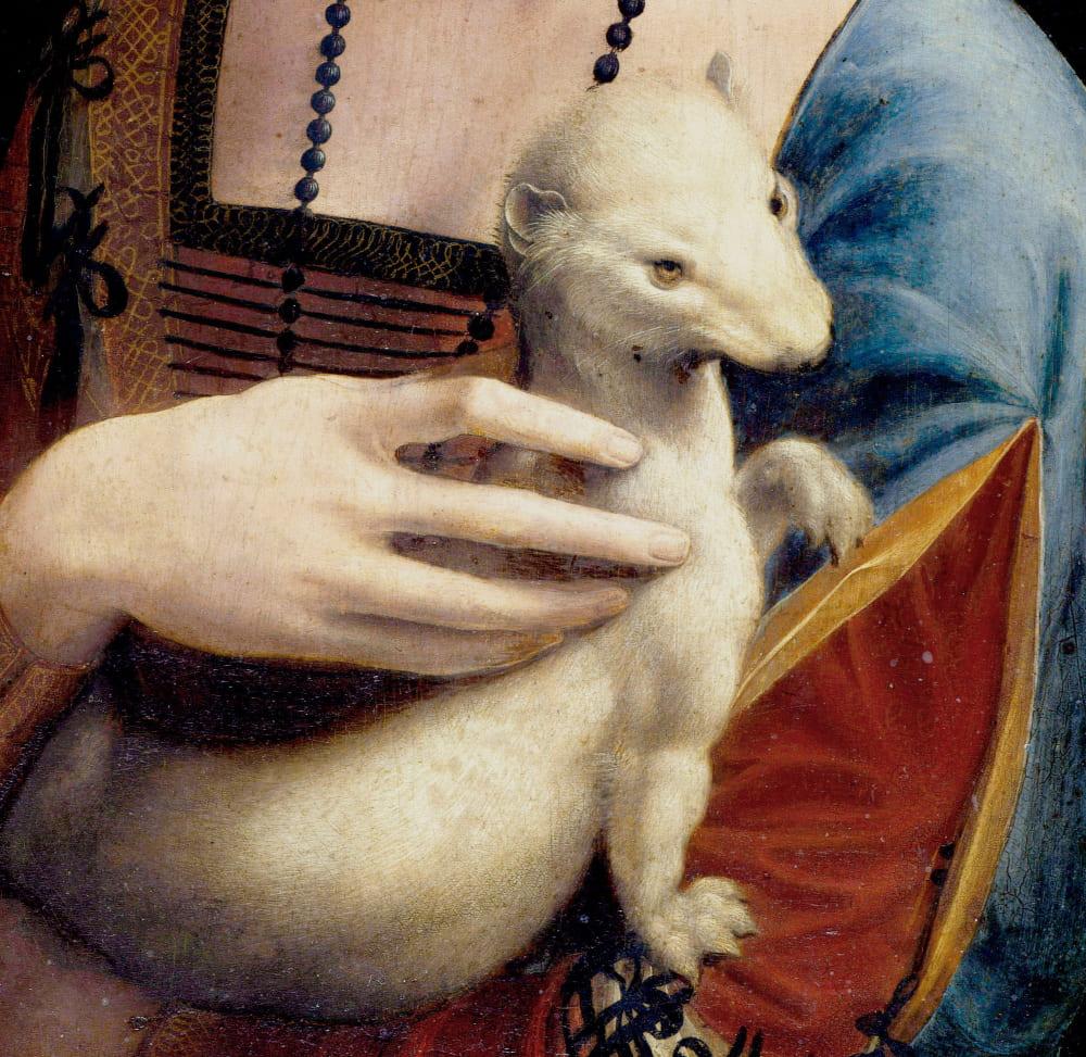 Горностай на картине Леонардо да Винчи «Дама с горностаем»
