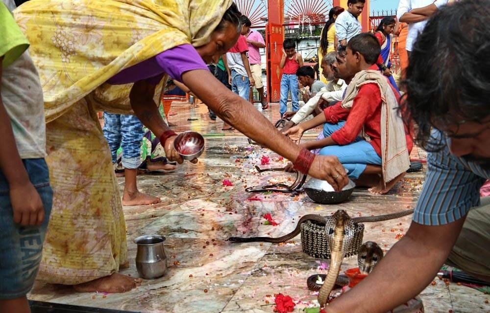 На празднике поливают змей молоком и посыпают специями