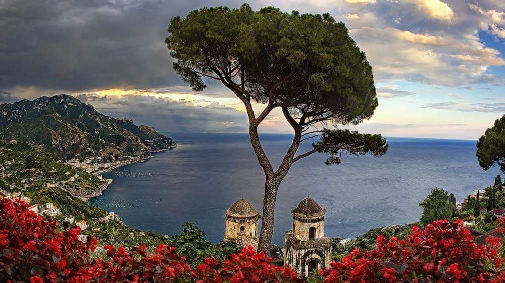 Вот такие прекрасные деревья растут в Италии