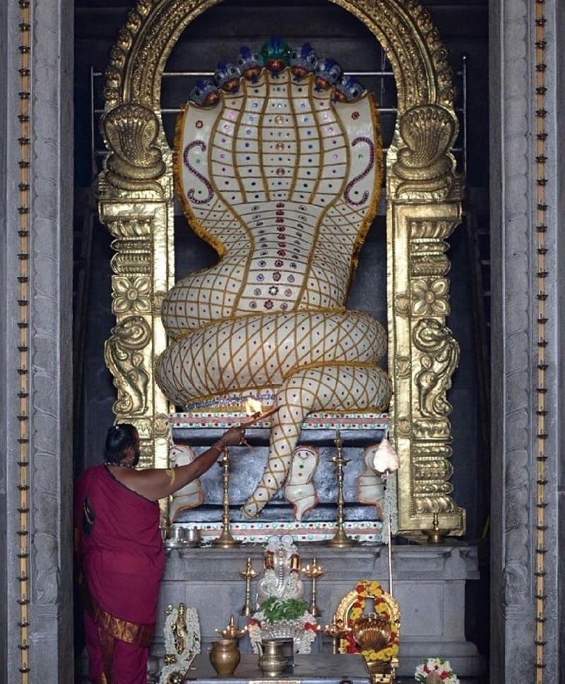Храм змей в Индии