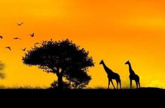 Легенды Африки