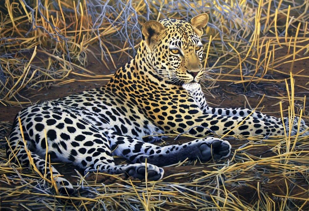 Леопард вместе с людьми вышел из подземного мира / © Rob Macintosh / robmacintoshartist.com