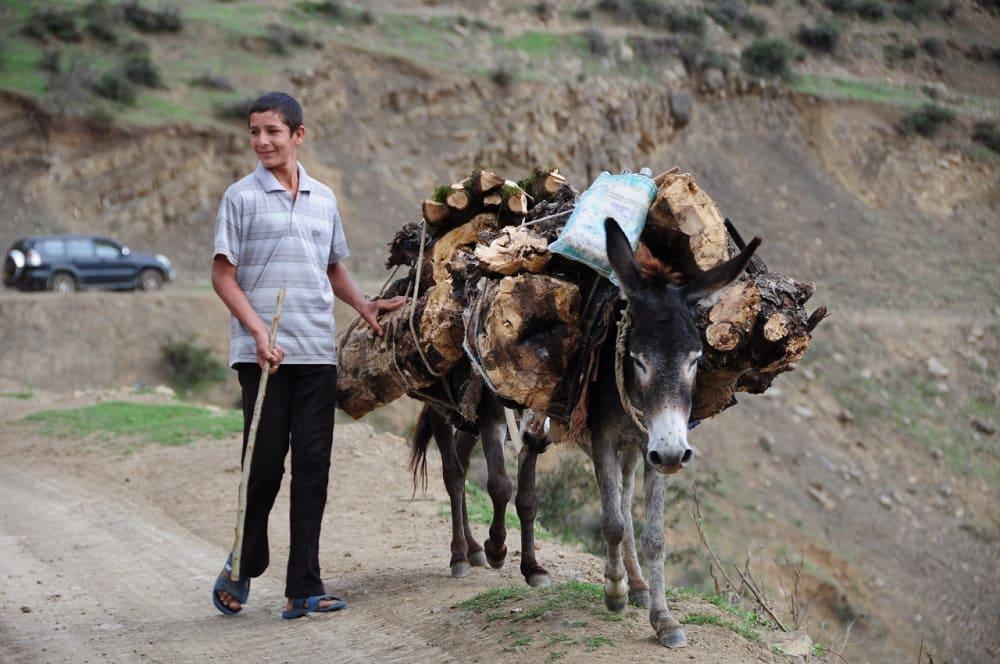 Талышские дети обязательно участвуют в домашних работах / © Foton Fan / talyshcenter.org