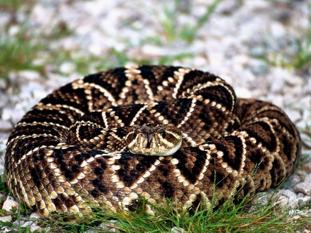 В славянской мифологии змея, свёрнутая в клубок, означала вечность / animalreader.ru