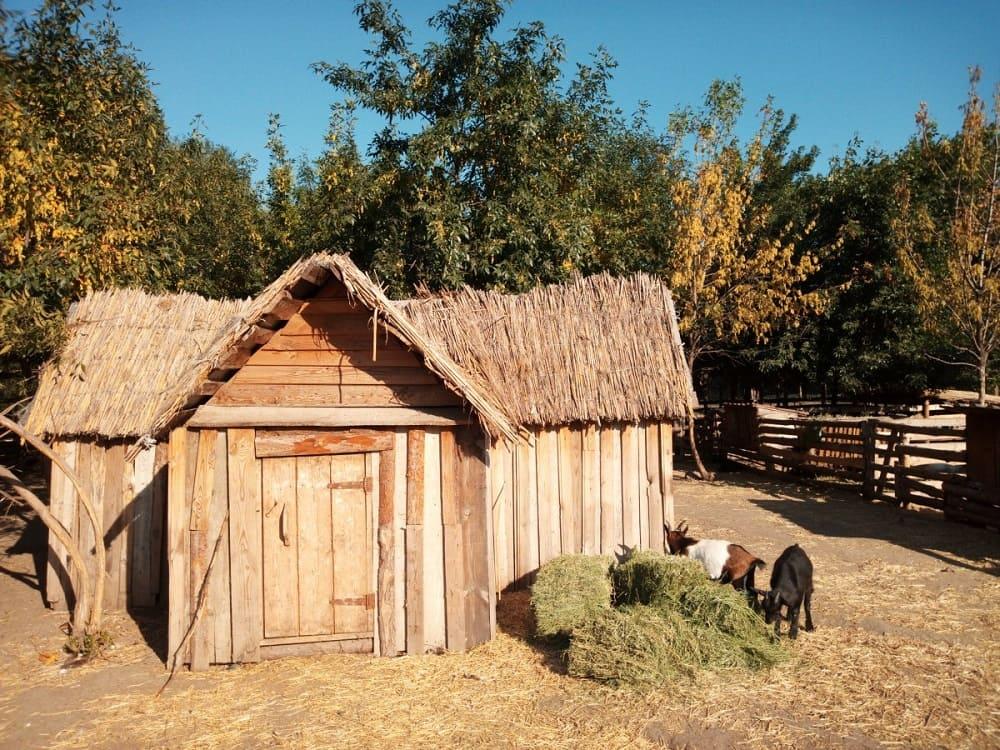 Жизнь и здоровье домашнего скота и птицы зависели от расположения Дворового/ © Irina Prokopenko / pxhere