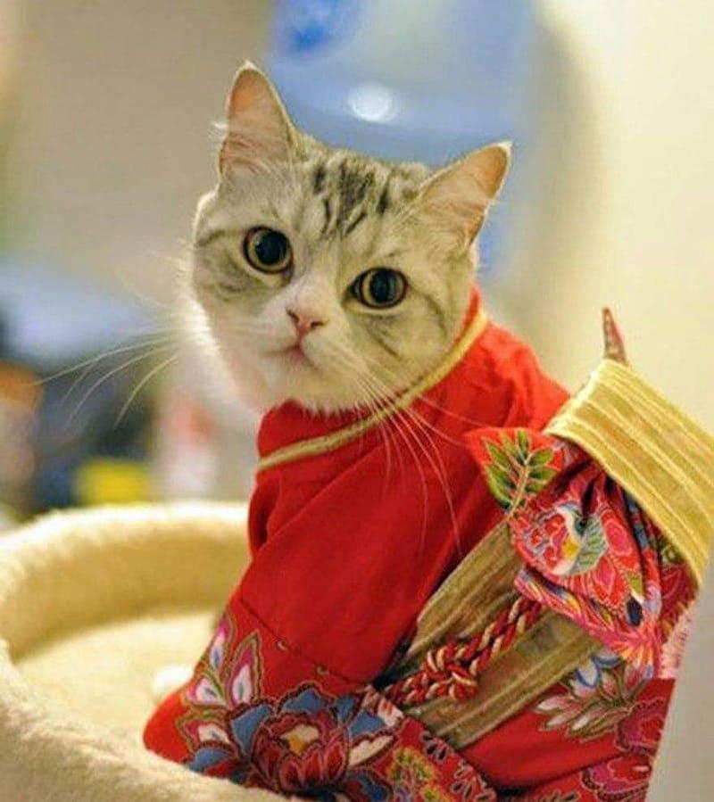 22 февраля у японских кошек праздник / aminoapps.com