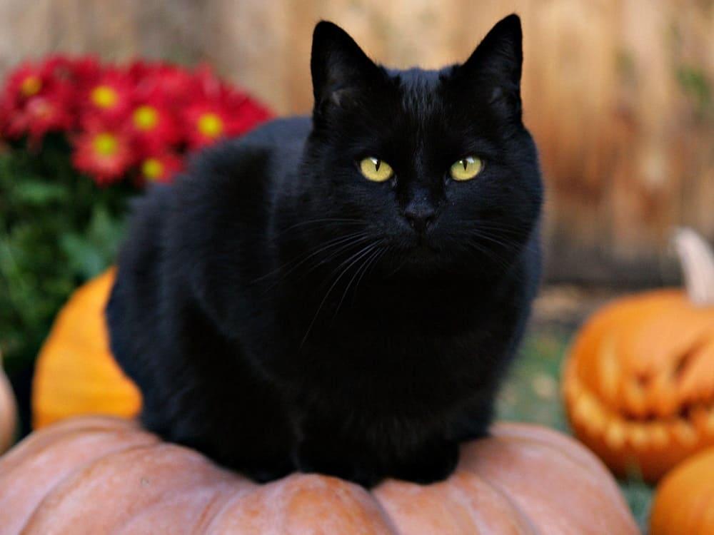 Чёрный котик защитит от негатива и зла / goodfon.ru