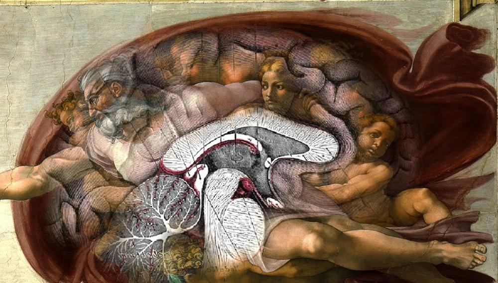 Существует теория, что в изображении Бога, очертаниях красной ткани вокруг него Микеланджело отразил анатомически точное строение человеческого мозга