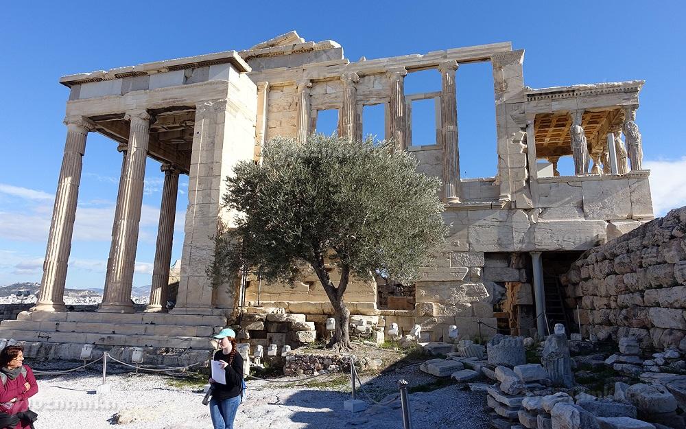 Священная олива Афины на территории Пандросиона (святилище Пандросы, дочери основателя Афин Кекропа) на северной стороне Акрополя / abzubov.com