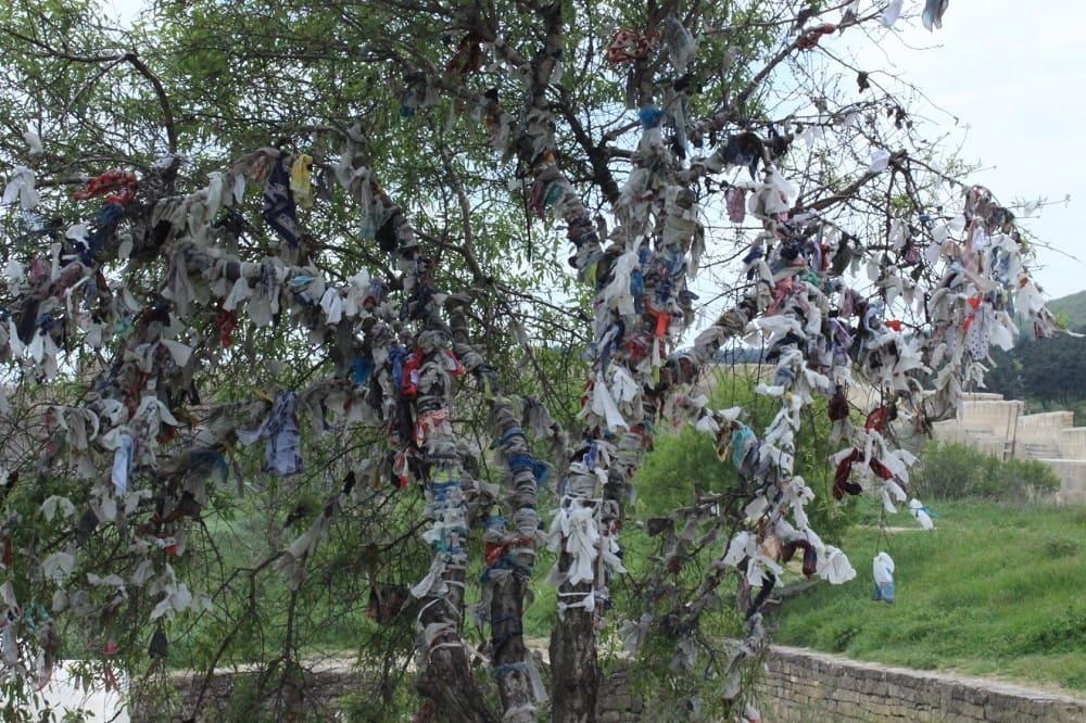У такого дерева можно попросить защиты и помощи у добрых духов, а затем следует оставить на дереве кусочек ткани - как дар потусторонним силам / turdagestan.ru
