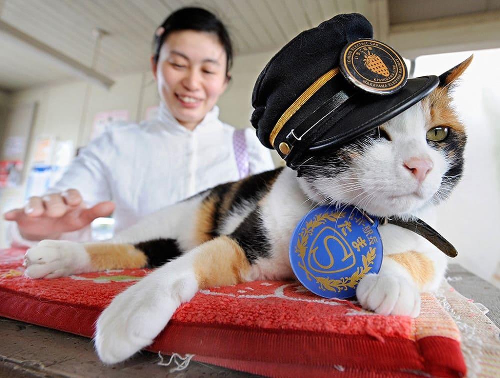 В Японии очень любят кошек. Видимо, поэтому японские кошки - мировые рекордсменки по продолжительности жизни / kotello.ru