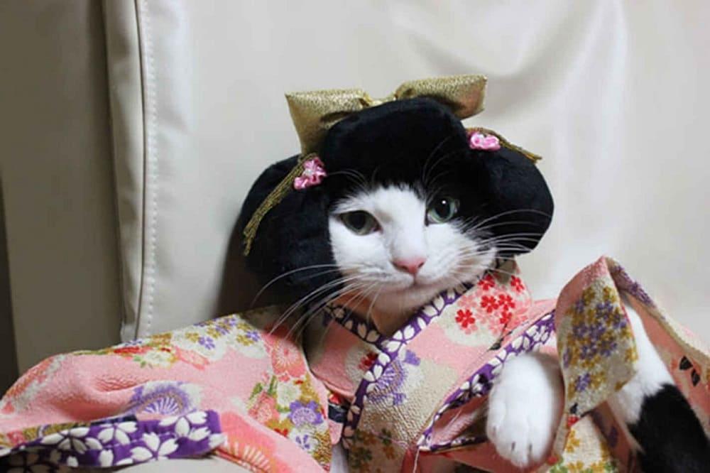 В Японии популярны и кошки, и кимоно / volshebnayakofeinya.blogspot