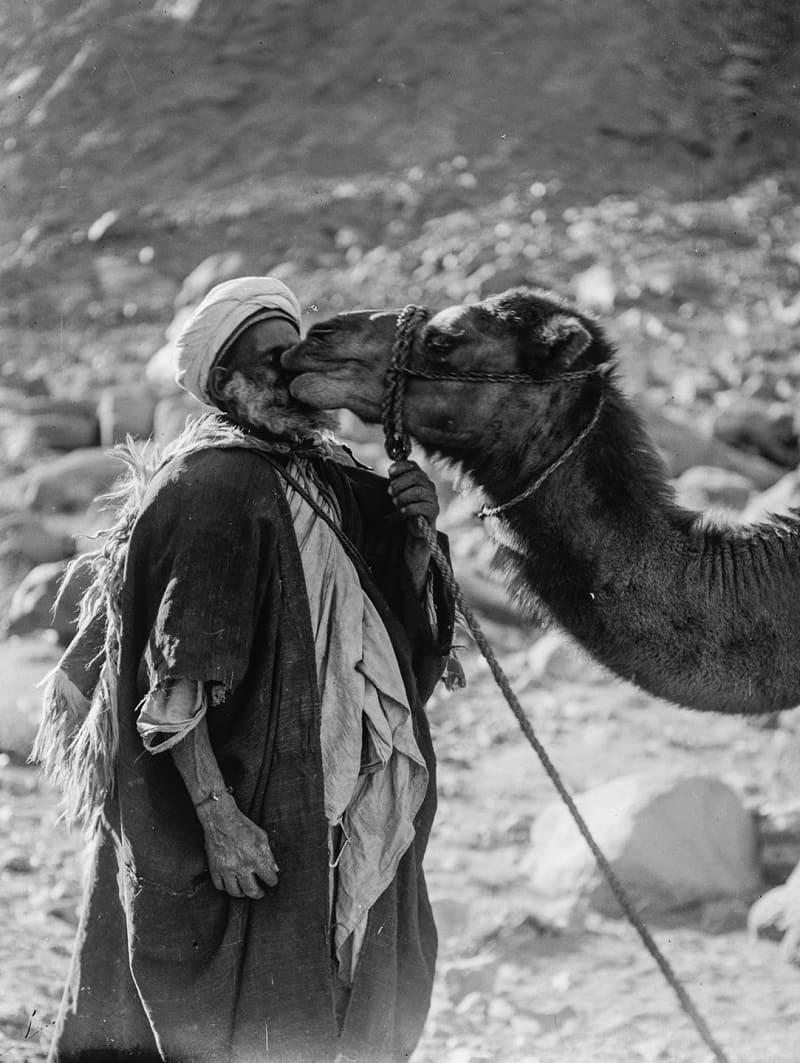 Именно разведение и одомашнивание верблюдов помогло предкам кувейтцев развить свою культуру, дойти до новых экономических вершин