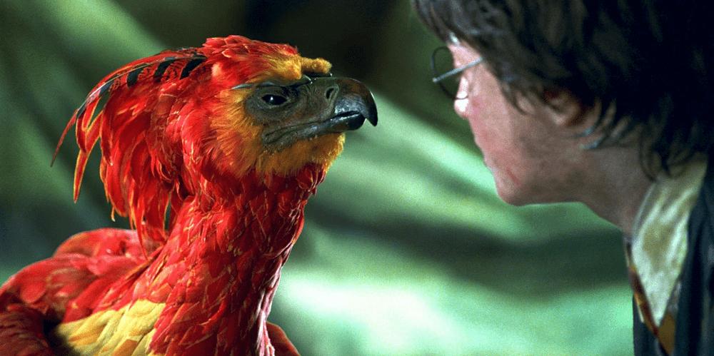Кадр из фильма «Гарри Поттер и Тайная комната», 2002 год