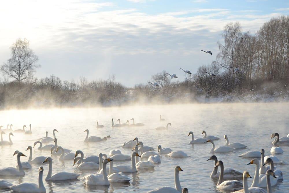 В честь белоснежных грациозных птиц это озеро назвали Лебединым / pibig.info