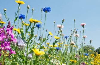Волшебные травы - Ben Jessop pexels.com