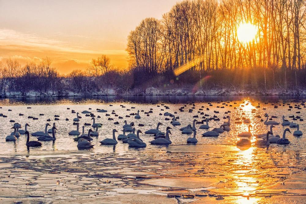 Закат цвета золота на Лебедином озере / © Галина Шепелева / fotokto.ru