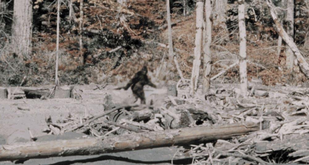 Знаменитый кадр с плёнки, отснятой Роджером Паттерсоном в 1967 году