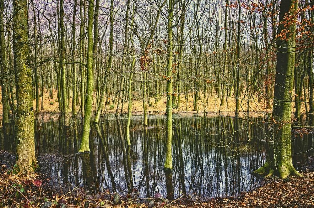 Пролившийся кумыс образовал болота и ручьи / © Tama66 / pixabay.com